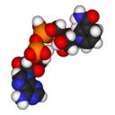 Pancreatitis – Digestive Enzymes Gone Wild