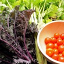 Living a Sustainable Lifestyle with the Paleo Diet