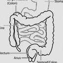 Leaky Gut Syndrome: How to Solve this Bodily Plumbing Issue