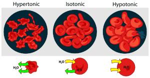 circulatory-system